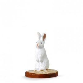 lapin blanc droit